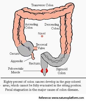 intestine-graphic