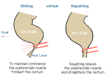 sit-vs-squat-diagram