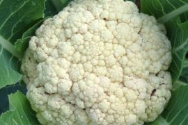 Cauliflower-Snow-Crown