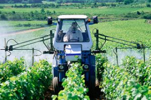 Farmer in a tractor spraying pesticides in a vineyard, Meursault, France