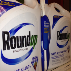roundup 125 more toxic