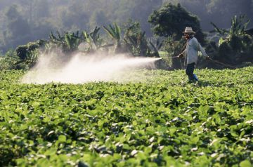 roundup and lymph cancer
