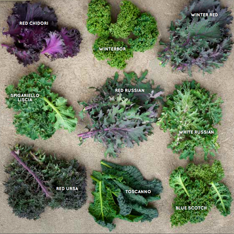 kale-types-screen-shot