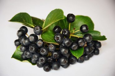 aronia-chokecherry